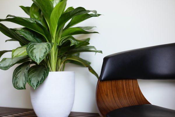 Des plantes pour votre séjour